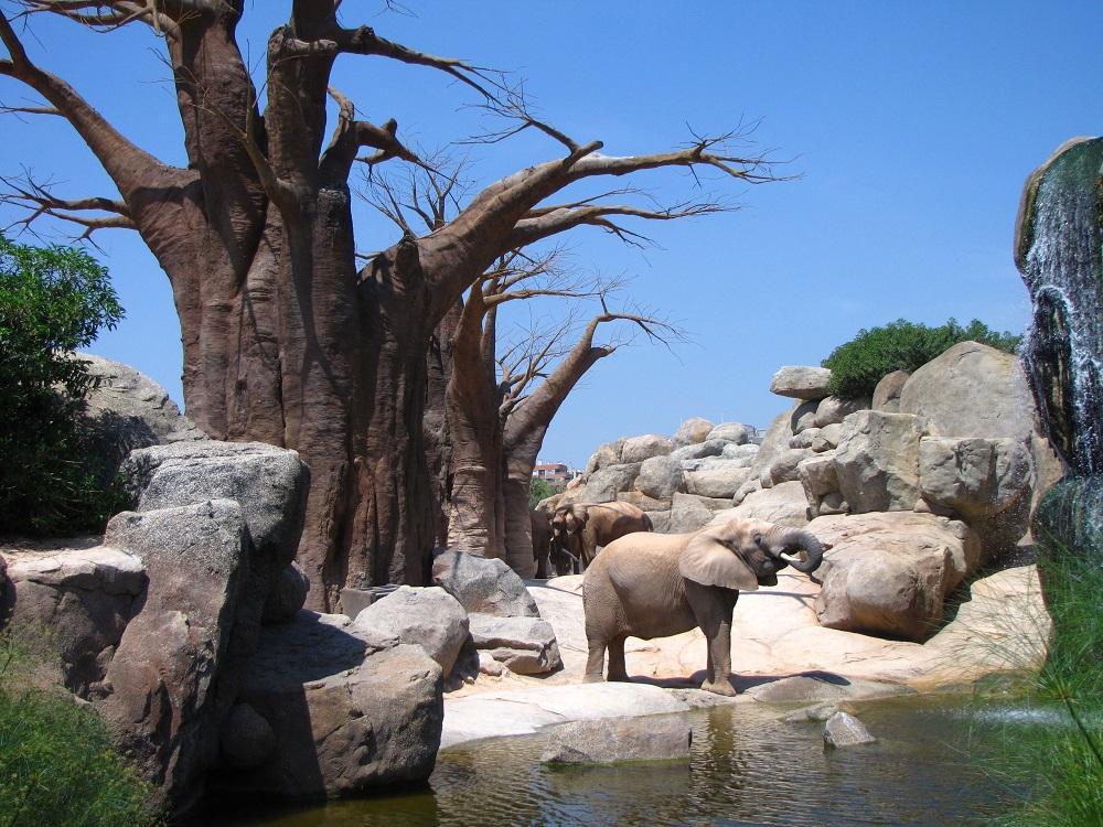 8 predlogov odličnih živalskih vrtov/parkov po svetu